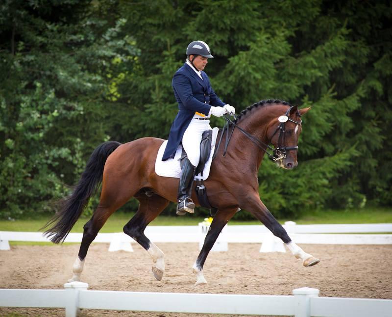 Stallion Listings A-L - Canadian Sport Horse Association